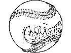 Baseball Teeth M B 1 Decal