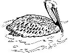 Birds Brown Pelican T G P A 1 Decal