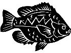 Blue Gill Fish 1 4 1 V A 1 Decal