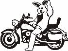 Bunny On A Bike M M 1 Decal
