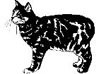 Cats Manx 1 3 1 V A 1 Decal