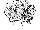 Flowers Amaryllis 1 5 9 V A 1 Decal