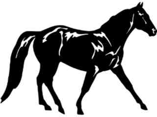 Horse Missouri Fox Trotter_ 1 4 3_ V A 1 Decal Proportional