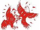Roosters Fighting Decal