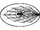 Spider In Web Circle Decal