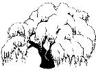 Trees Willow 1 5 8 V A 1 Decal