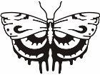 Butterfly Tribalized 1 0 0 Decal