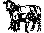Cows Brown Swiss 1 3 3 V A 1 Decal