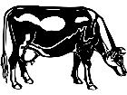 Cows Guernsey 1 3 3 V A 1 Decal