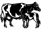 Cows Holstein 3 1 3 3 V A 1 Decal
